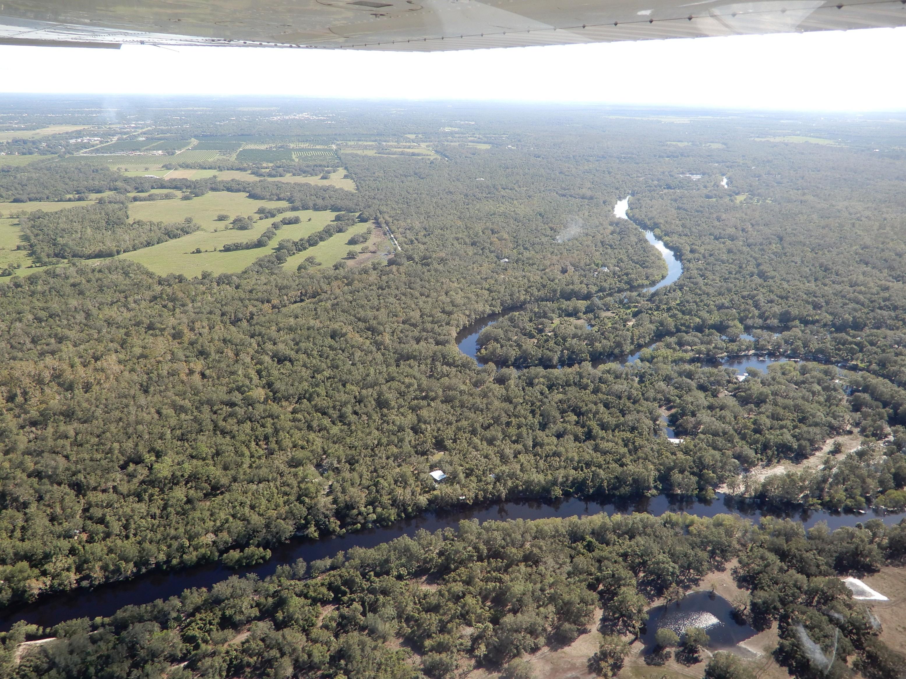 Řeka Piece River protékající přírodou střední Floridy.