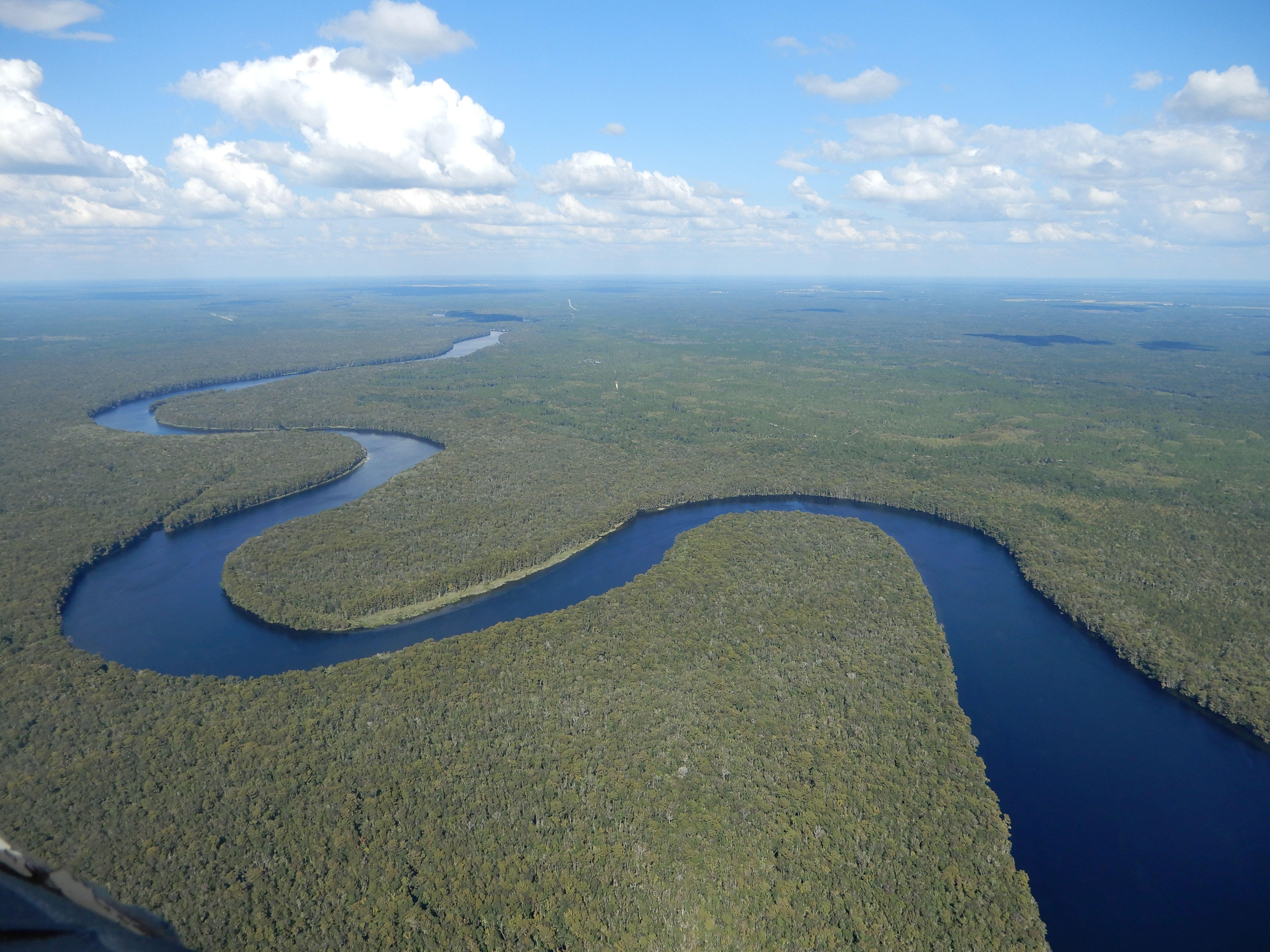 Džunglí vonící Suwanee river plná aligátorů a dalších druhů floridské divočiny